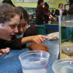 Life Sciences Outing - Aquarium