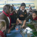 Life Sciences Outing - Aquarium (2)