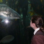 Life Sciences Outing - Aquarium (4)