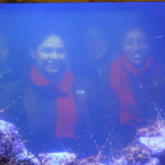 Life Sciences Outing - Aquarium (7)