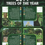 2014 Trees of the Year